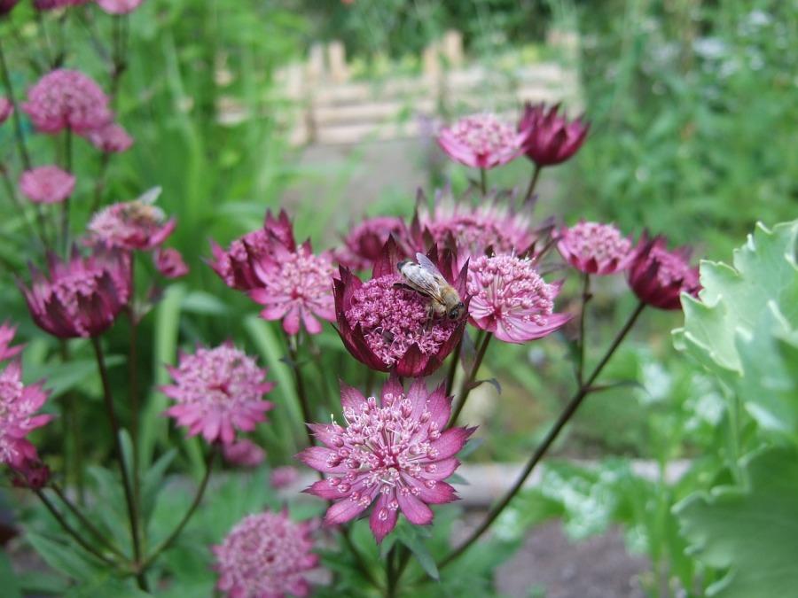 flower-643439_1280