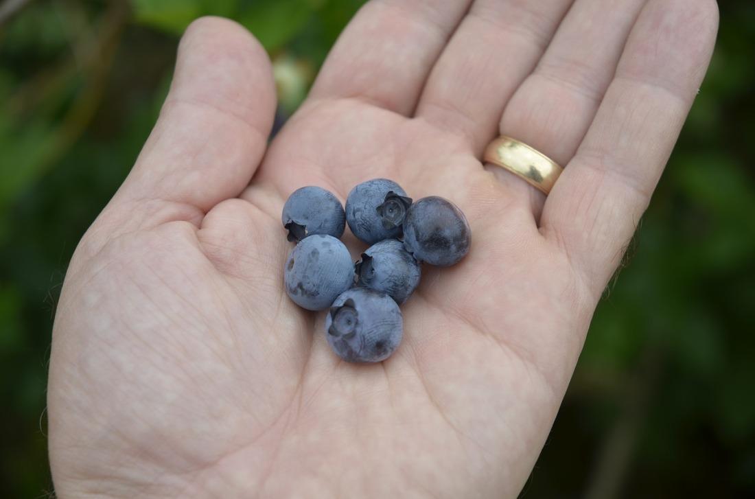 blueberries porridge