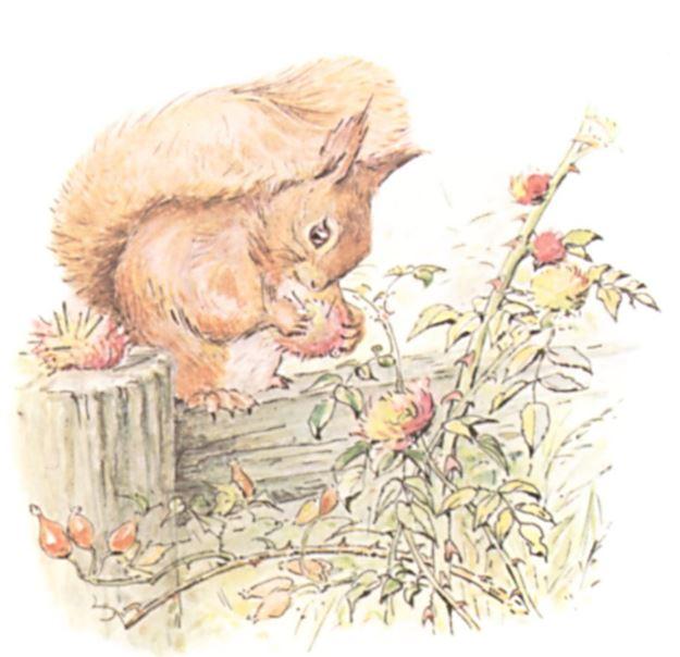 squirrel-nutkin-2