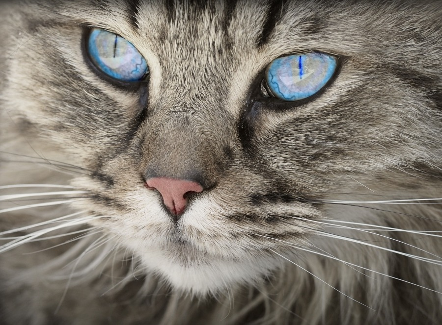 cat-1508613_1920