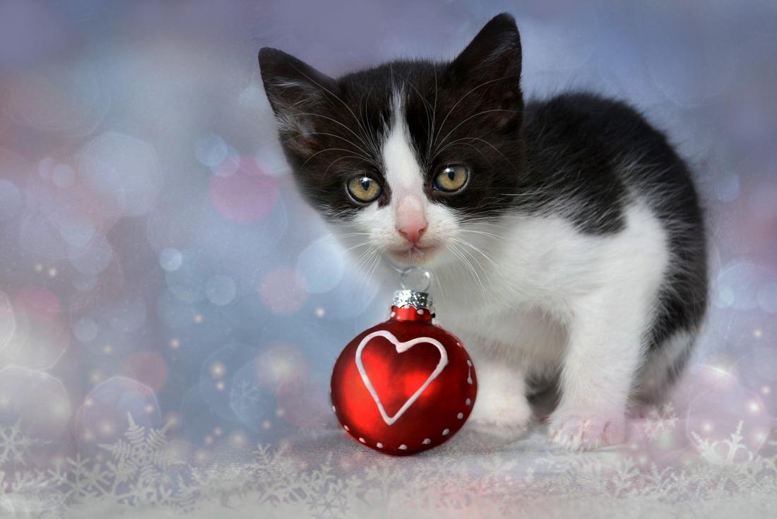 kitten-1856133_1920