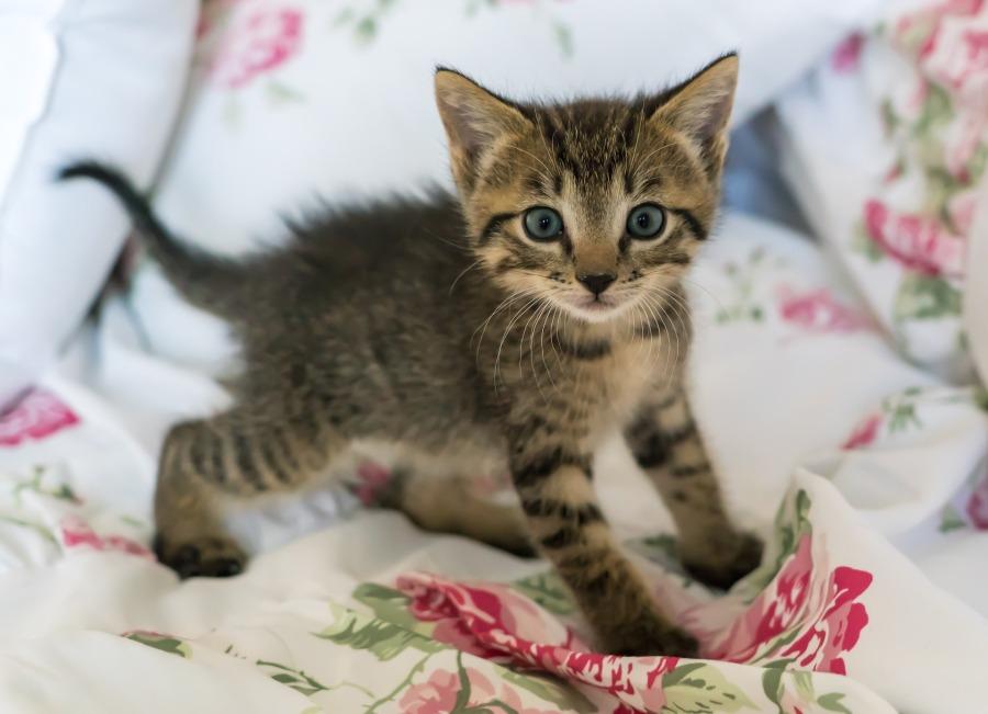 kitten-1517537_1920